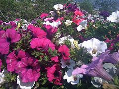 bloemen 3g