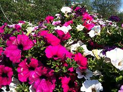 bloemen 3gs