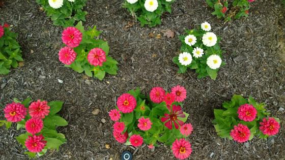 bloemenfoto-nokia