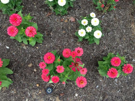 bloemenfoto-iphone