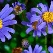 Beste apps voor tuinieren en planten verzorgen voor iPhone en iPad