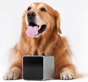 petcube-hond