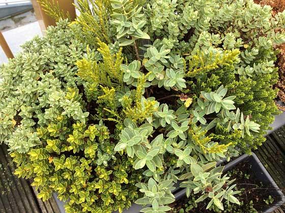 foto-planten-ipad-air