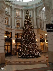 kerstboom den haag