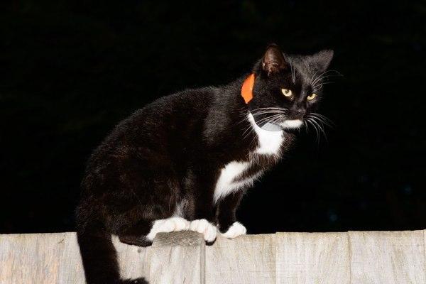 pawtrack kat zoeken
