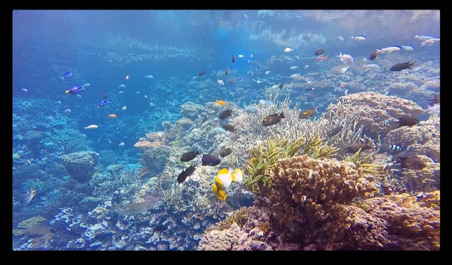Zoo in Huis van Burgers Zoo op de Apple TV met het koraalrif.