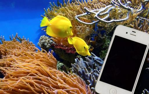 Vissen iPhone