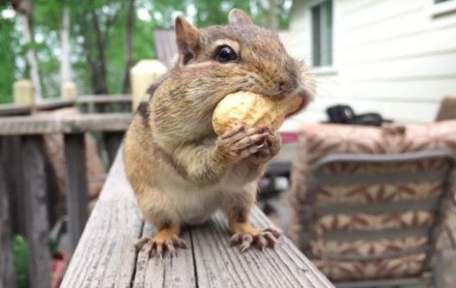 Shot on iPhone: eekhoorn in video