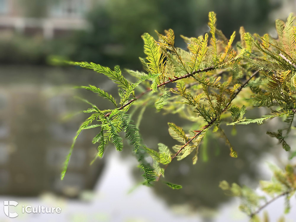 iPhone 7 cameratest: Een plant, gefotografeerd met de portretfunctie van de iPhone 7 Plus