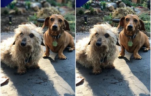 iOS 10 portetmodus - honden