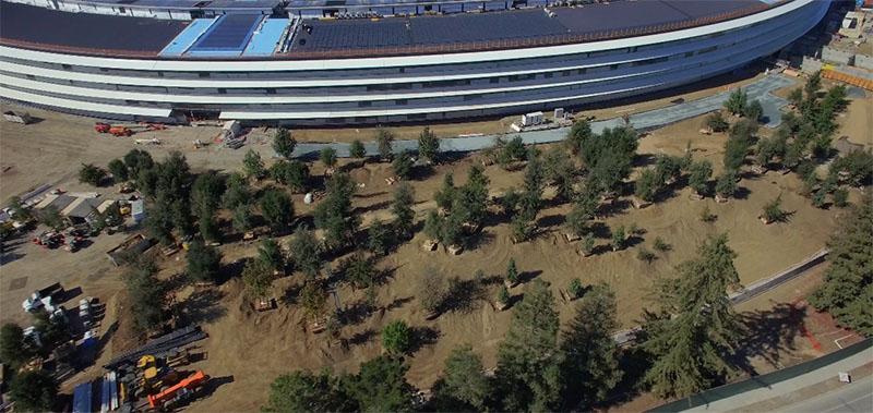 Apple Campus 2 beplanting