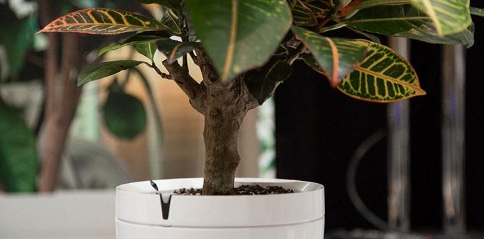 Parrot Pot met plant