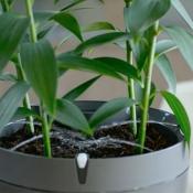 Parrot Pot: de sproeiers