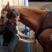 Equisense wearable voor paarden