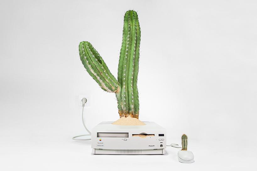 Plant Your Mac: een cactus