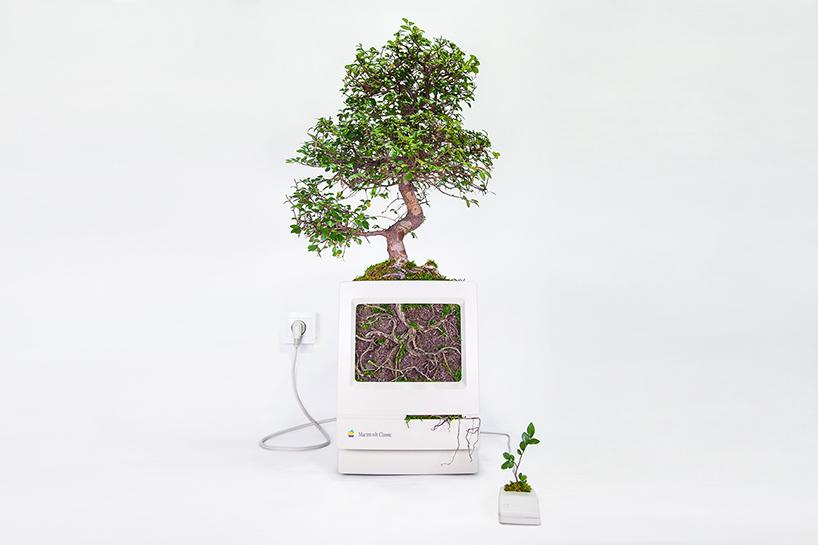 Plant Your Mac: bonsai in een klassieke Mac