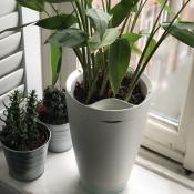Parrot Pot met planten