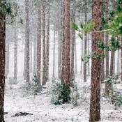 Wat moet Apple met 1.500 hectare bos?