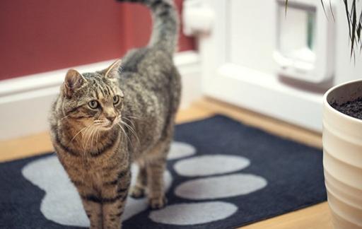 Kattenfoto