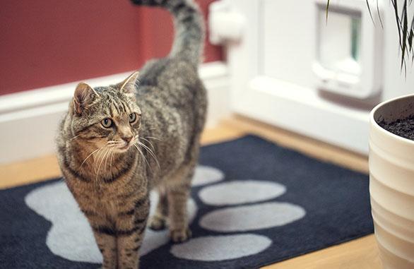 SureFlap kattenluik