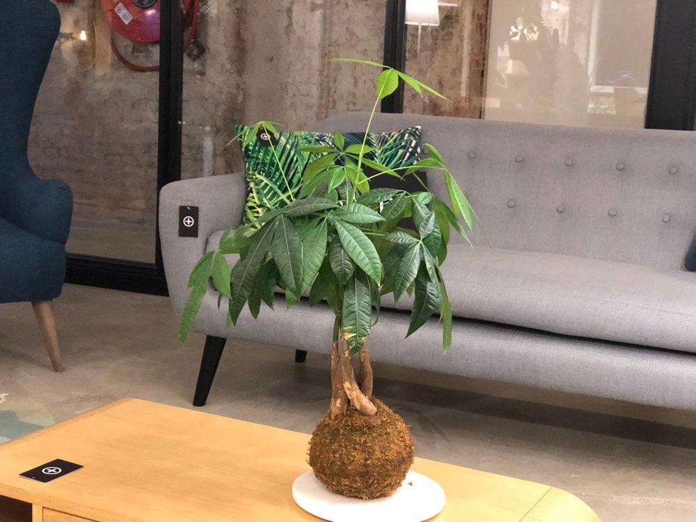 Cameratest met plantje en diepte