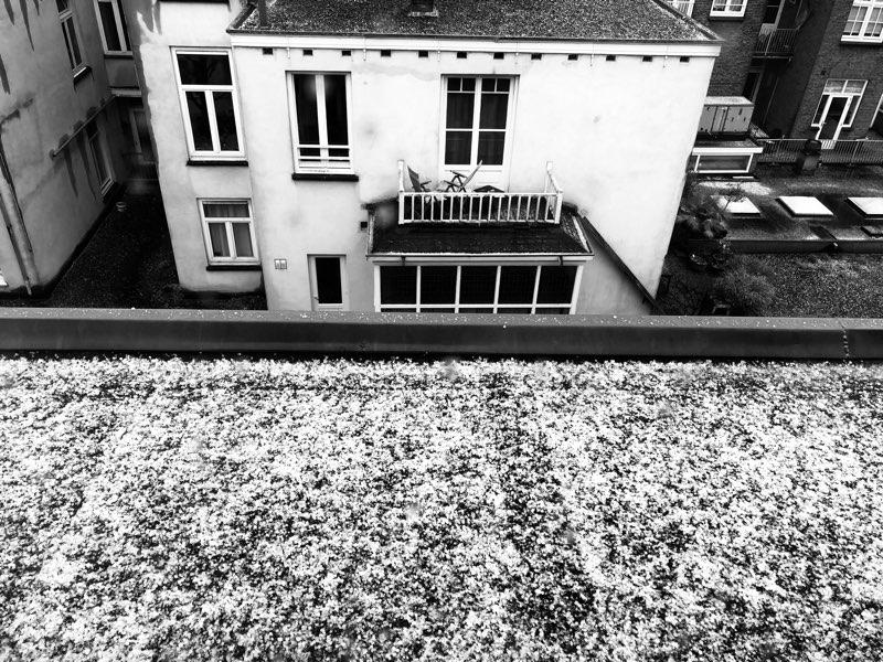 Sneeuwfoto zwart wit
