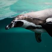 Greenpeace laat je zoeken naar Pinguïns in AR