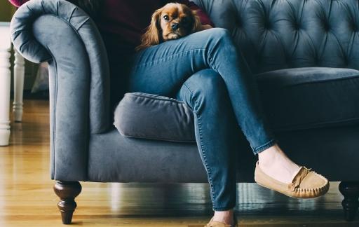 tv-kijken met hond