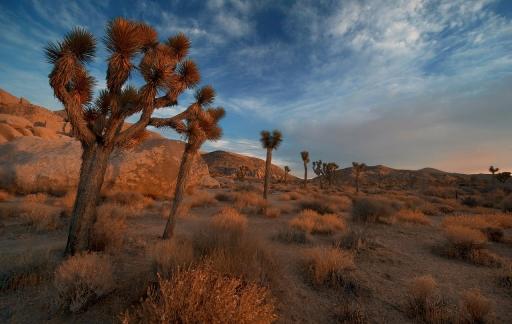 Mojave-woestijn