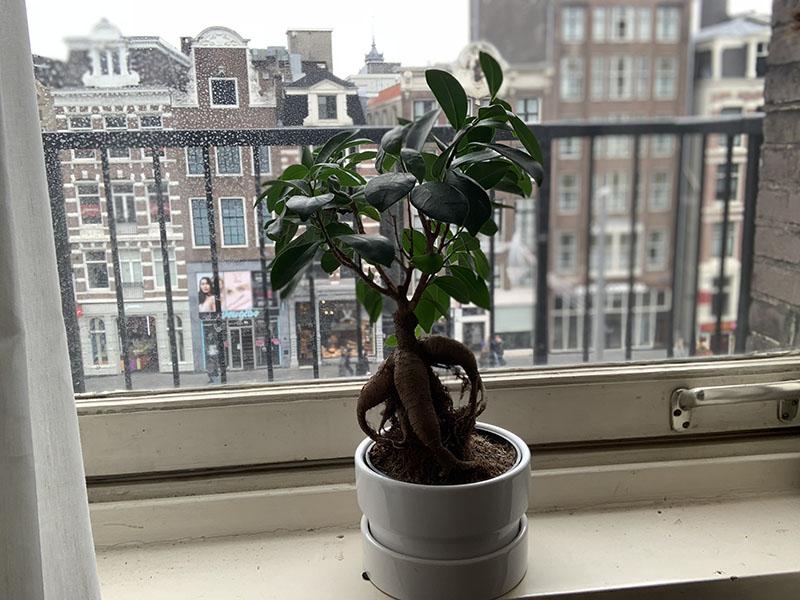 Plant-selfie met iPhone XR portretmodus