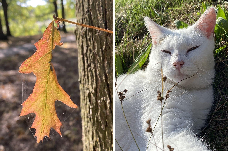 iPhone 11 Pro foto's blad en kat