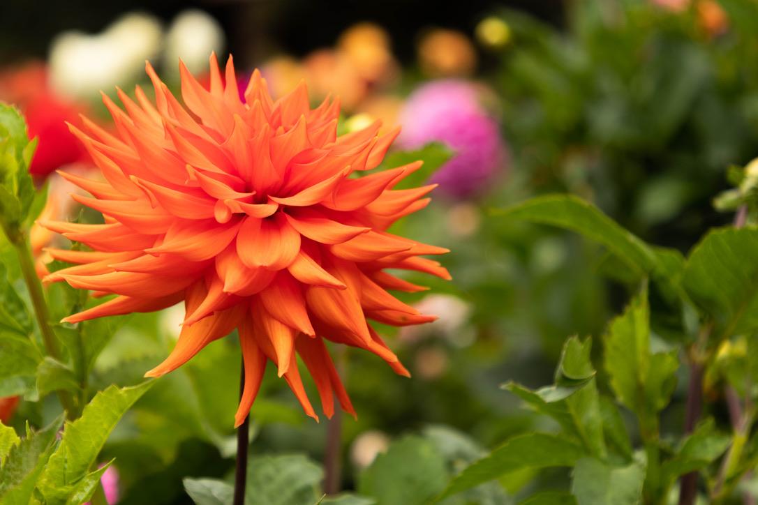 Bokeh bij een bloem