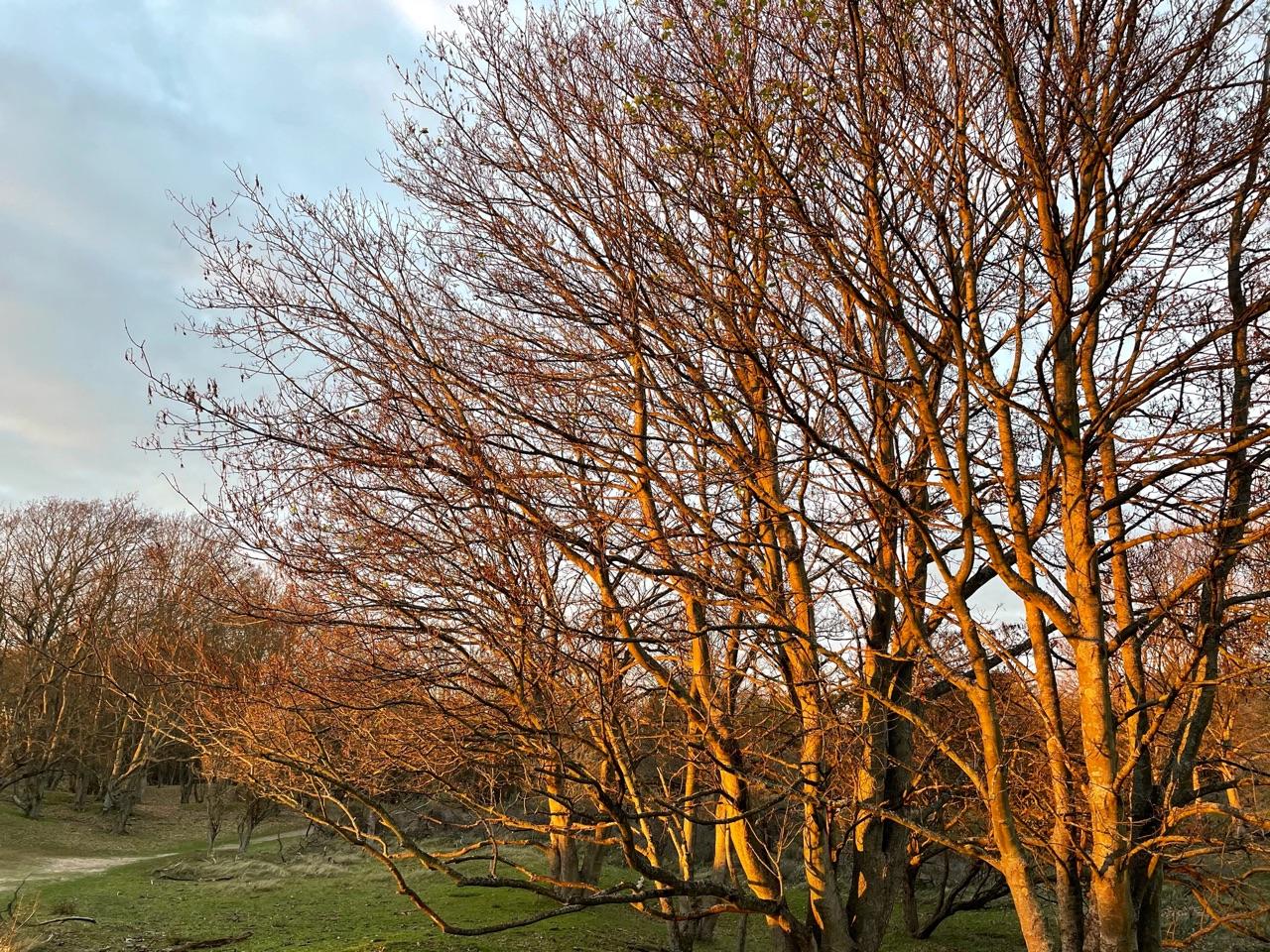 Foto zonsondergang met bomen, gemaakt met iPhone 12 mini.