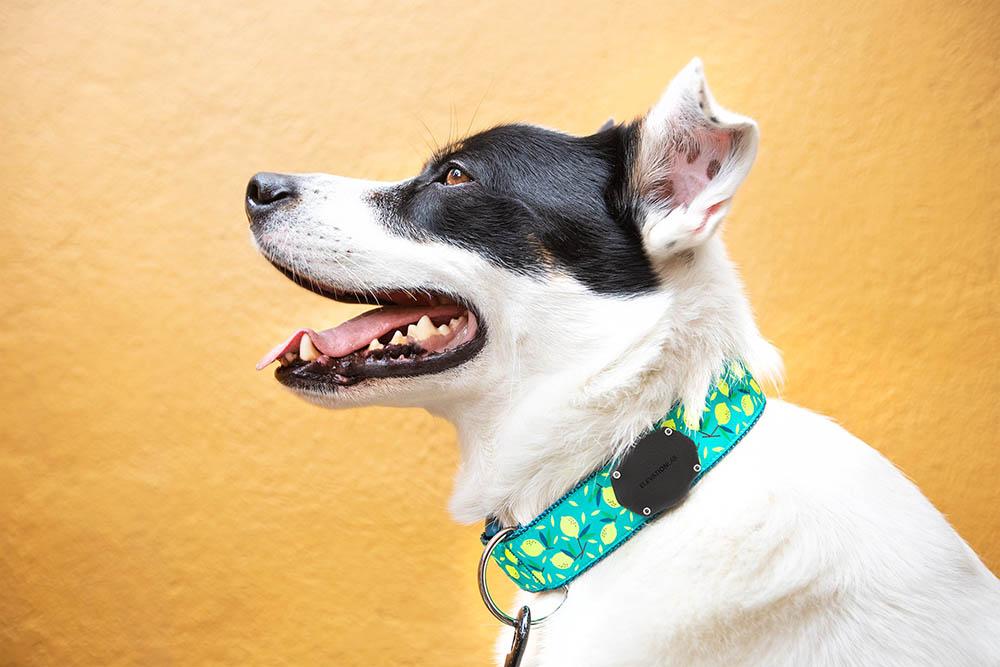 TagVault Pet: hond