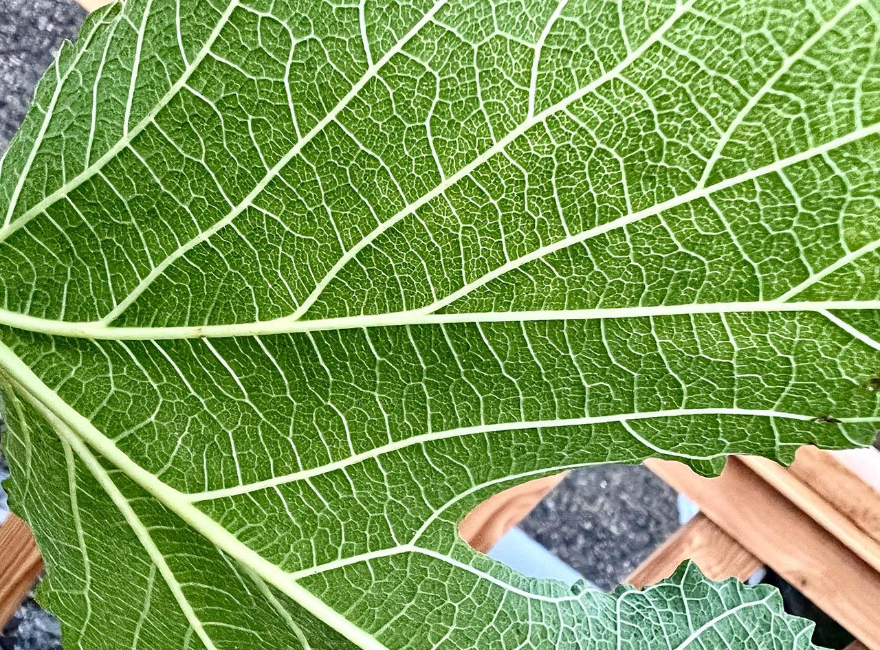 Macrofoto plant