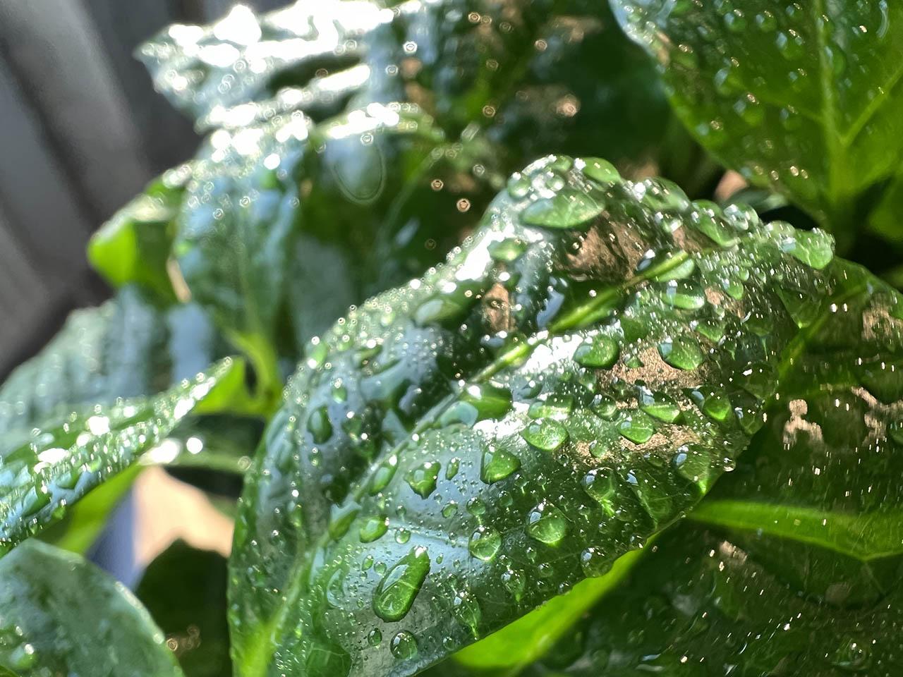 Macrofoto blad met waterdruppels